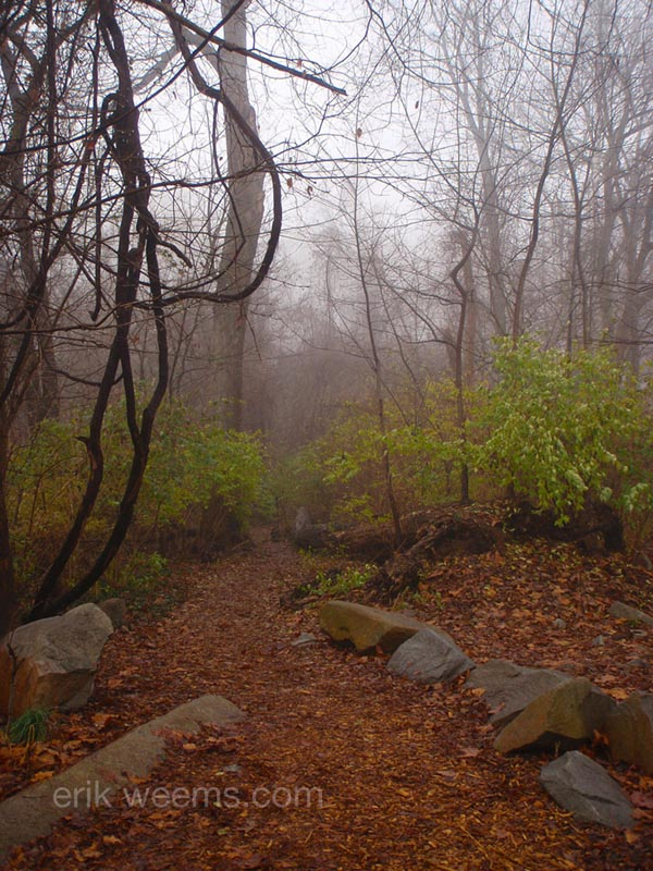 Fog Woods in Richmond Virginia