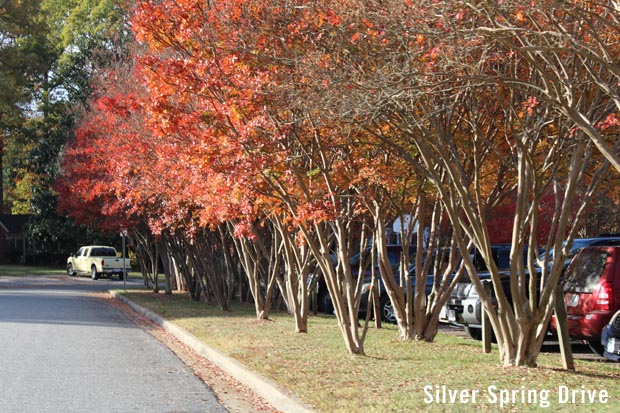 Silver Spring Drive